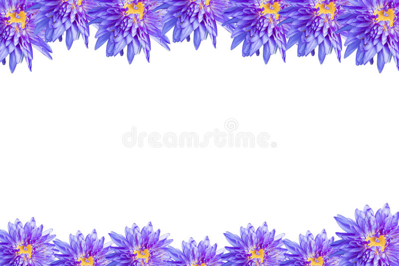 Цветение цветка лотоса иллюстрация вектора