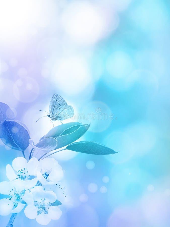 Цветение Яблока и предпосылка бабочки вертикальная стоковое фото rf