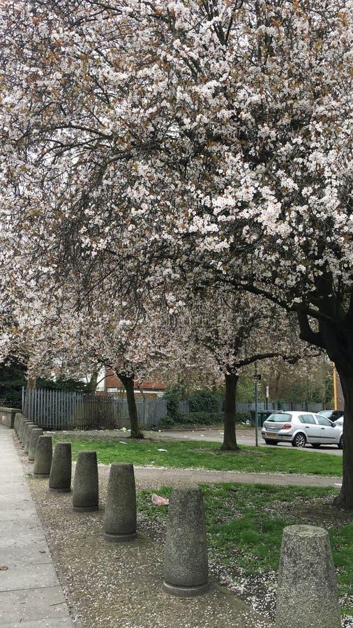 Цветения весны стоковое изображение