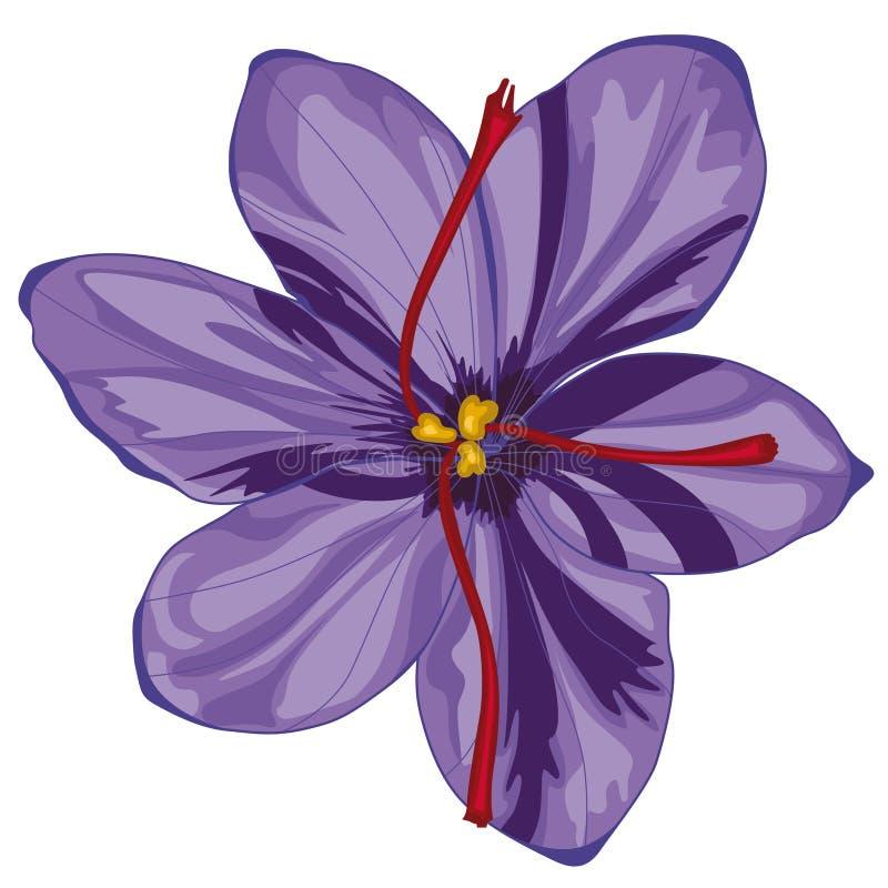 Цветения крокуса сирени шток померанца иллюстрации предпосылки яркий иллюстрация штока