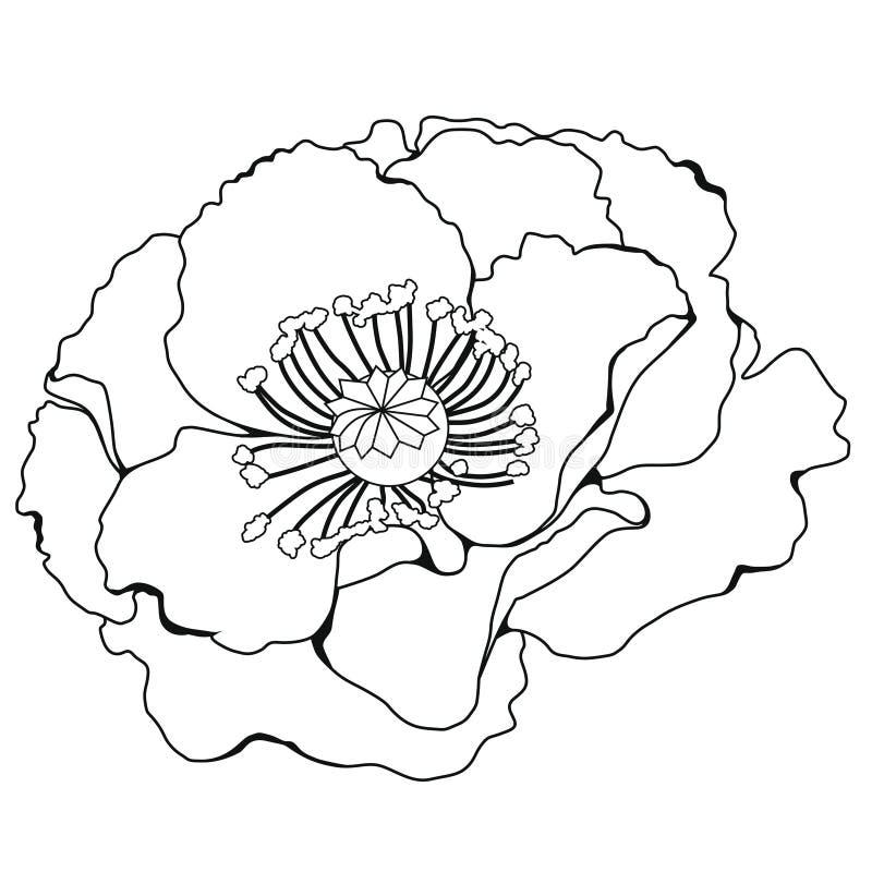 Цветения мака иллюстрация графика расцветки книги цветастая иллюстрация штока