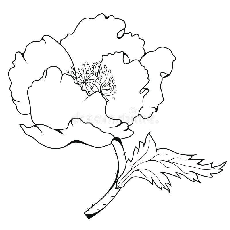 Цветения мака иллюстрация графика расцветки книги цветастая иллюстрация вектора