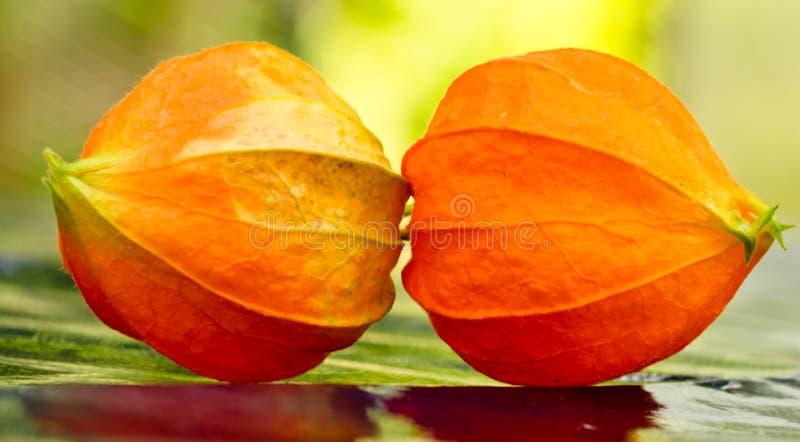 2 цветения оранжевой вишни земли клубники кладут совместно на землю и создают красивое symmetrie стоковые изображения
