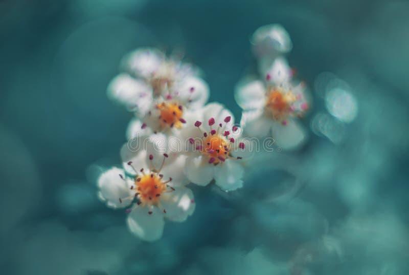 Цветения Яблока в cyan стоковые изображения rf