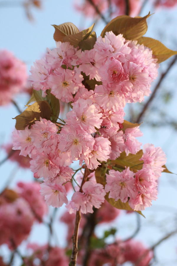 Цветения стоковые фото