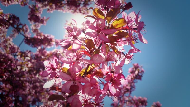 Цветения стоковая фотография rf