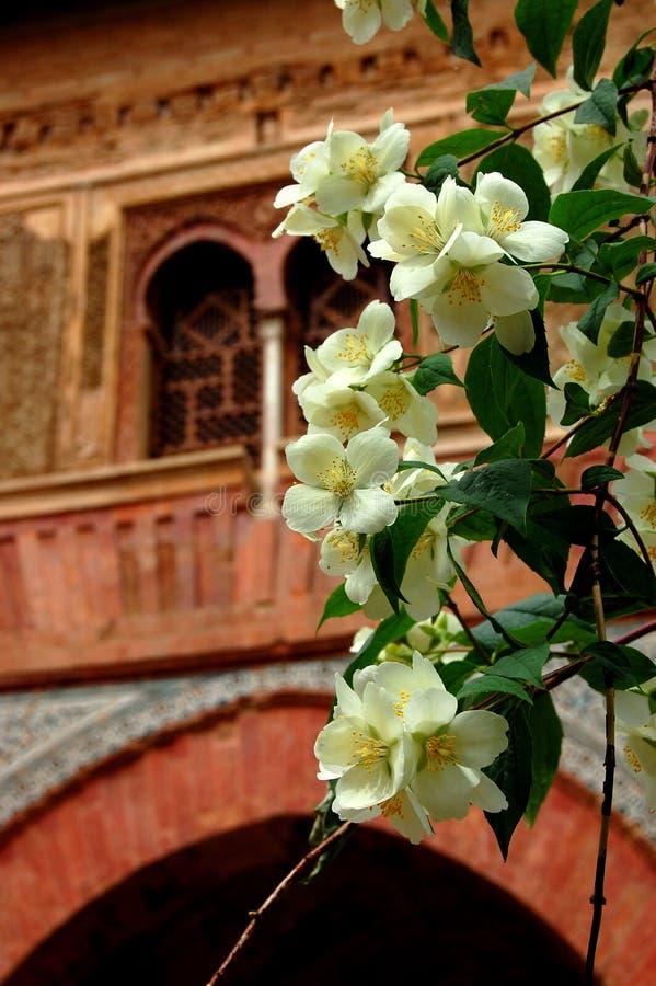 цветения alhambra померанцовые стоковые изображения rf
