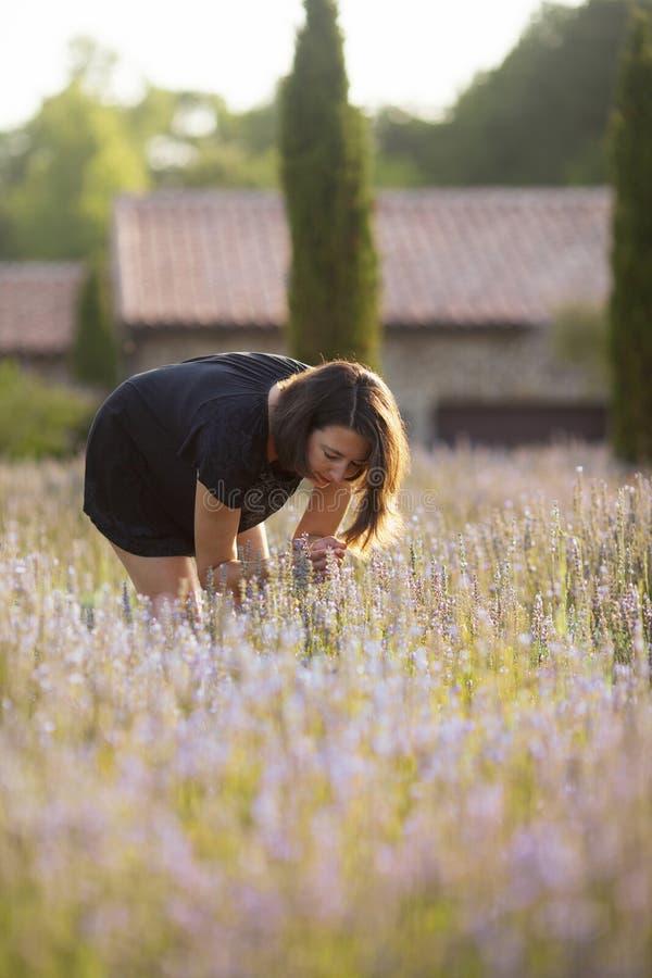 Цветеня лаванды женщины пахнуть стоковое фото rf