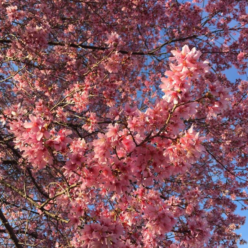 цветеня весны стоковые фотографии rf