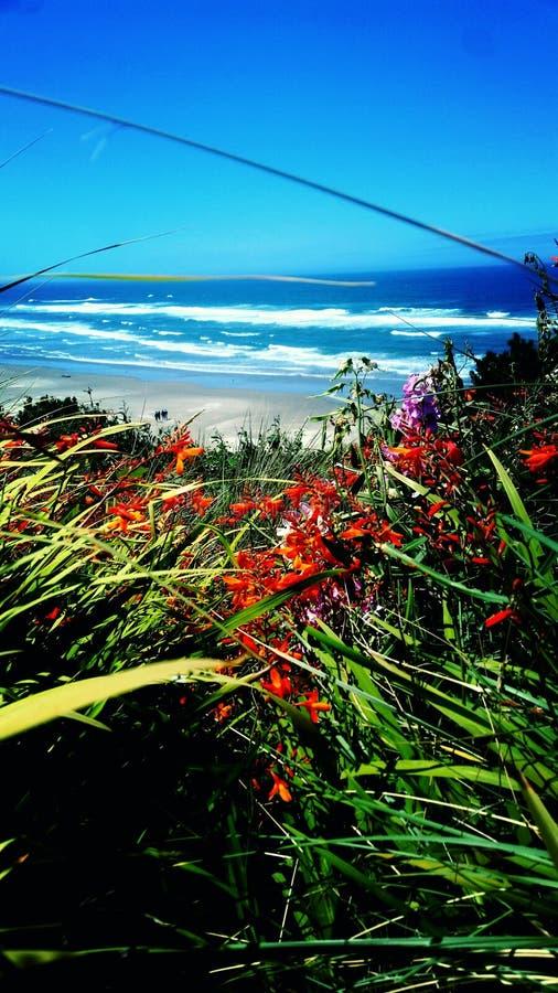 Цветеня на пляже стоковое изображение rf