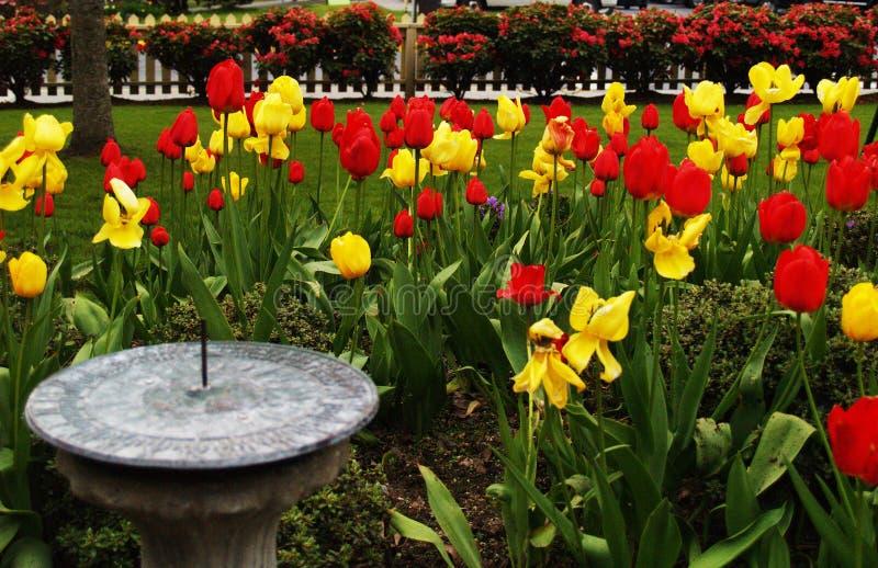Цветеня сада тюльпана стоковое фото