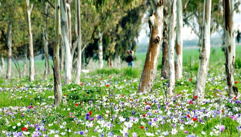 цветет весна пущи стоковые изображения rf