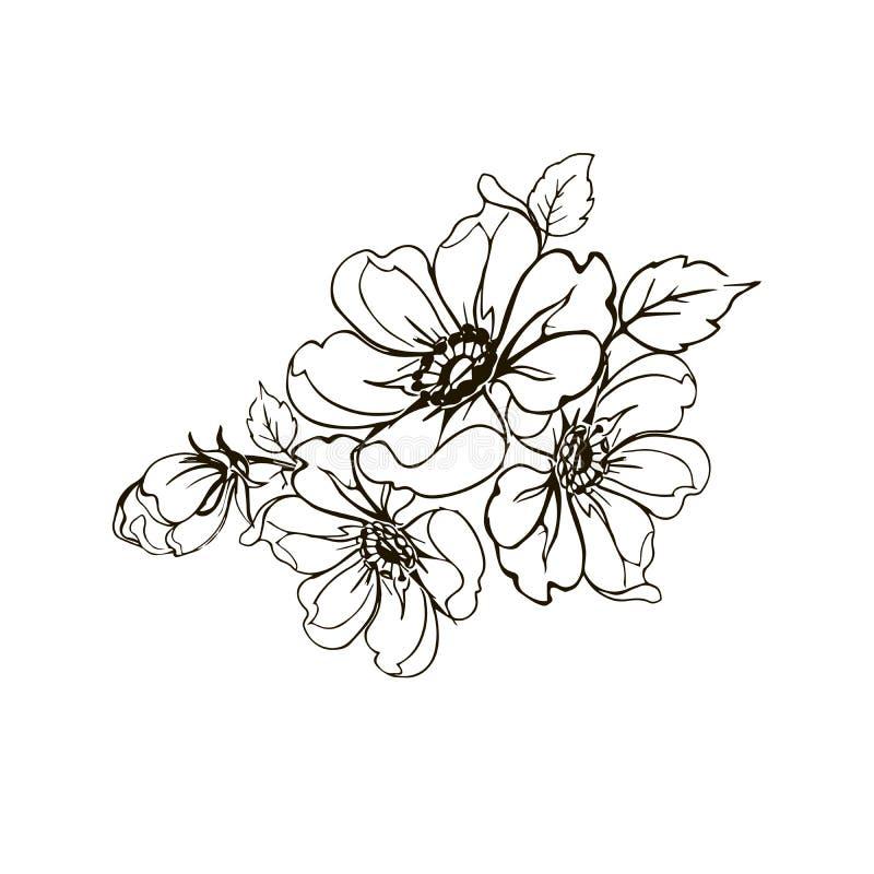 Цветет ветвь розы Рука рисуя ветвь розы Винтажные элементы дизайна бесплатная иллюстрация