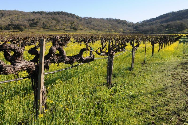 цветет виноградник стоковые изображения rf