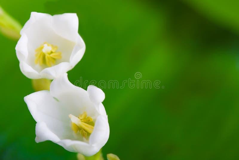 цветет долина макроса лилии стоковое изображение