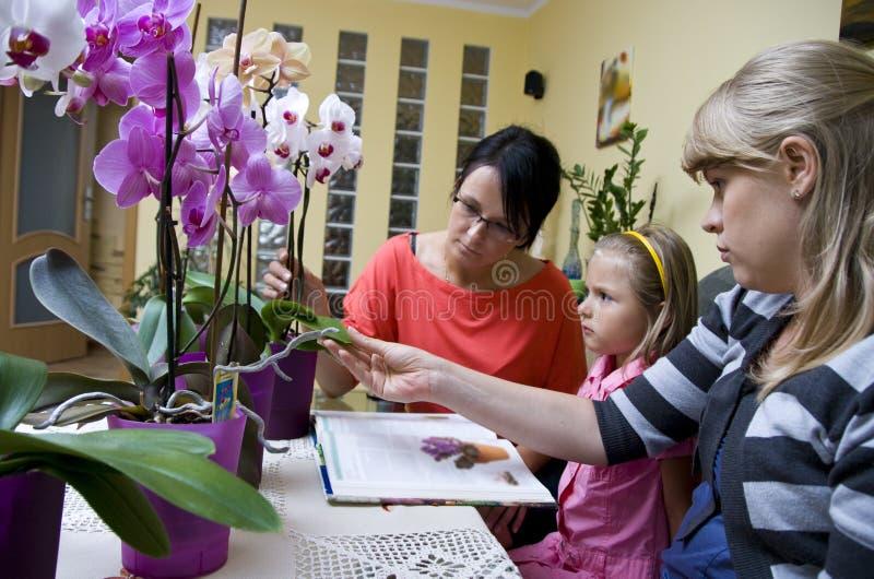 цветет домашний обучать стоковое изображение