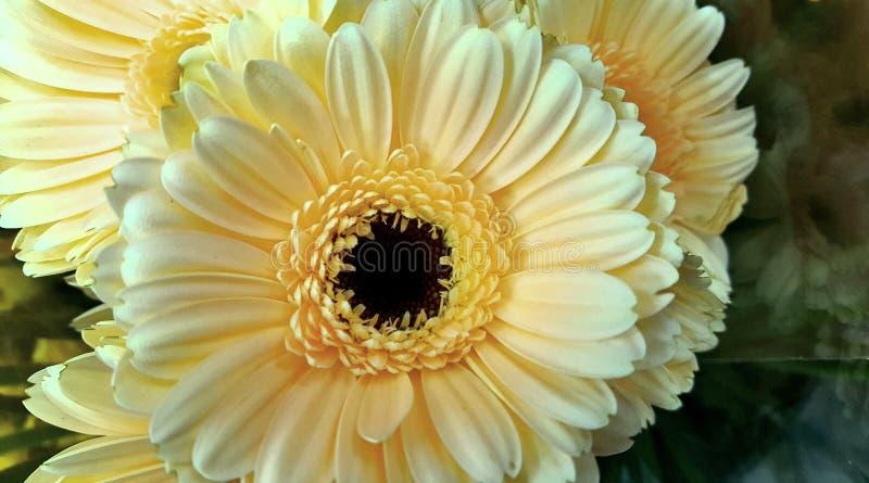 Цветет желтые цветы bloomig природы красивые стоковая фотография rf