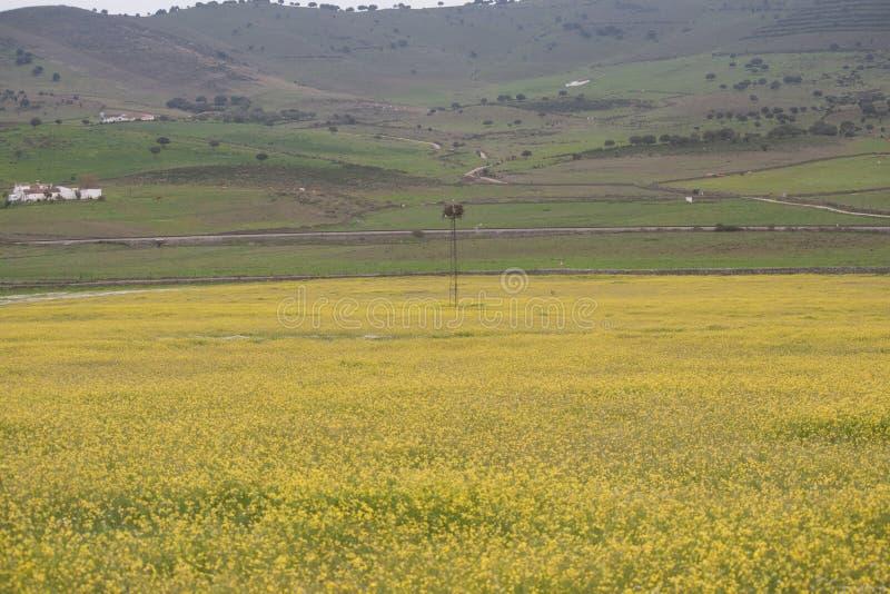 цветет желтый цвет лужка стоковое фото
