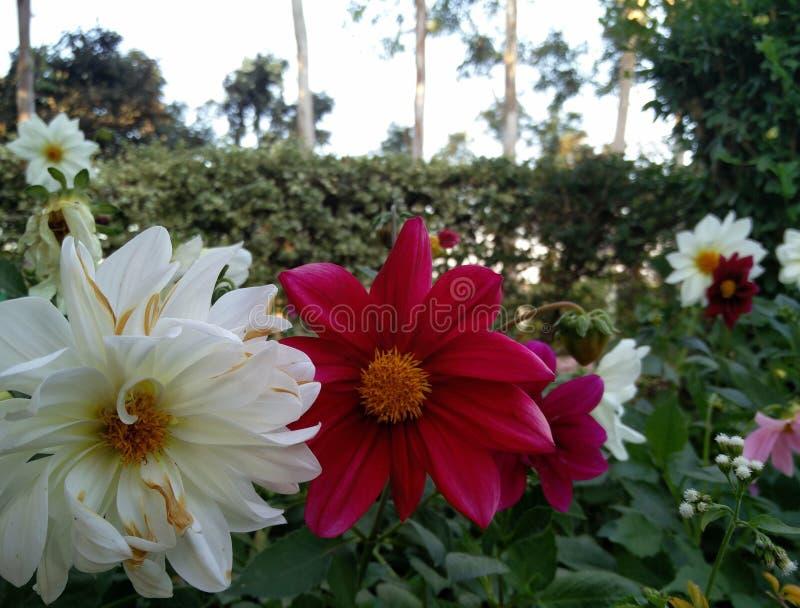 цветет живое стоковое изображение rf