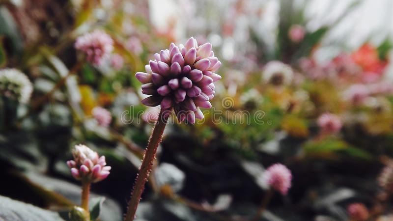 Цветет зеленый цвет макроса красивый розовый стоковые изображения rf
