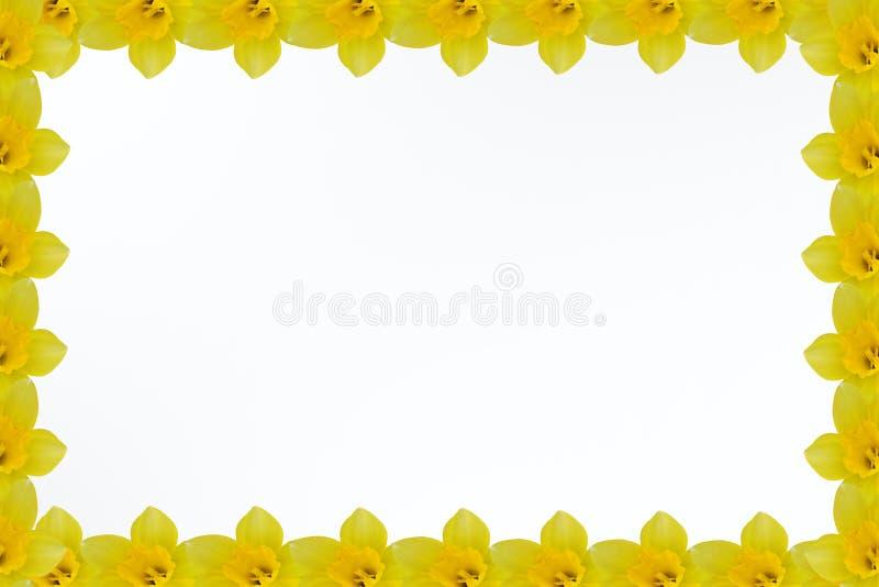 цветет иллюстрация рамки фрактали стоковое фото rf