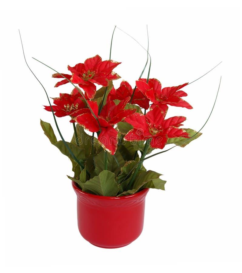 Download цветет красный цвет стоковое фото. изображение насчитывающей рождество - 6857742