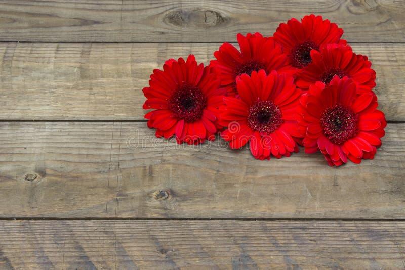 цветет красный цвет gerbera стоковая фотография rf