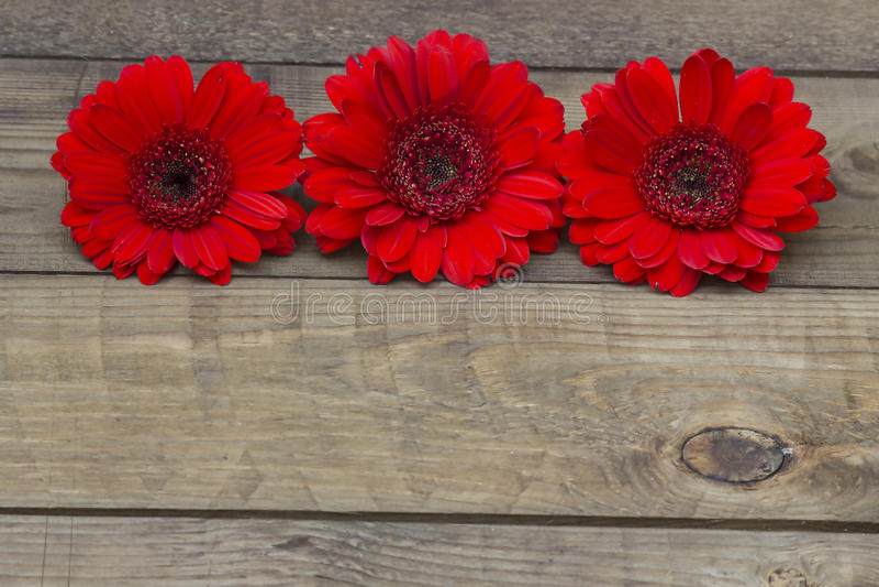 цветет красный цвет gerbera стоковая фотография
