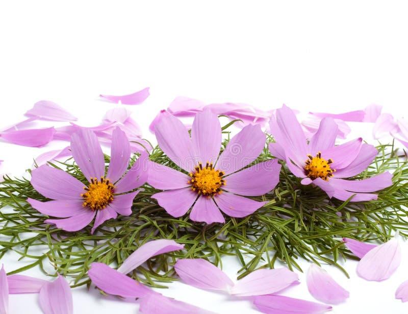 цветет лепестки стоковое изображение