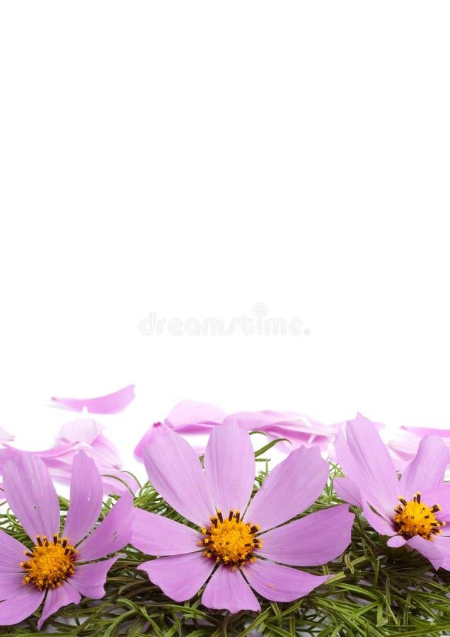 цветет лепестки стоковые изображения