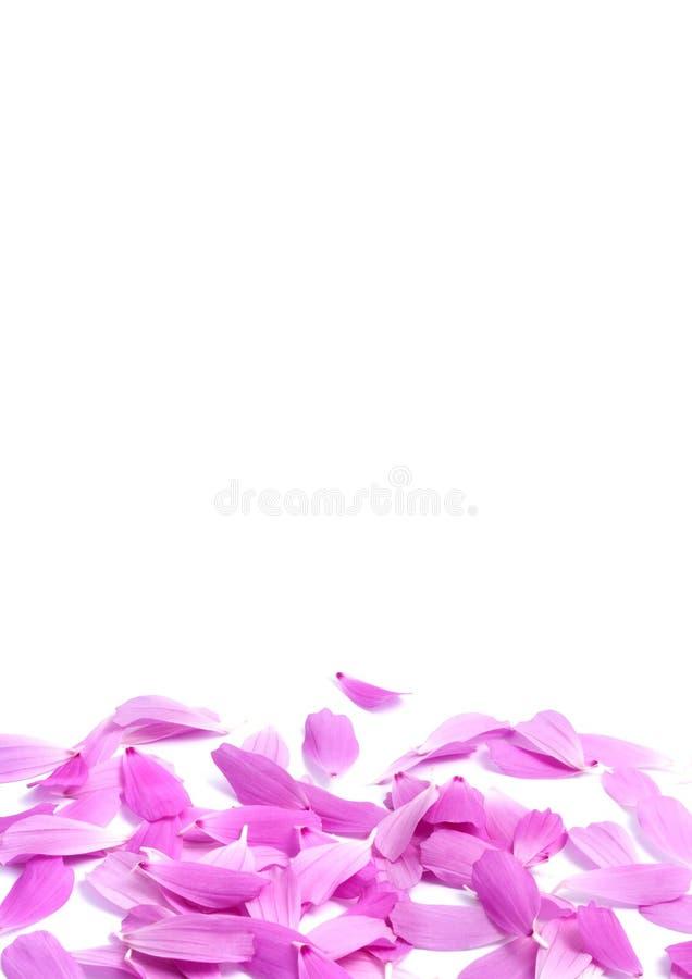 цветет лепестки стоковое фото rf