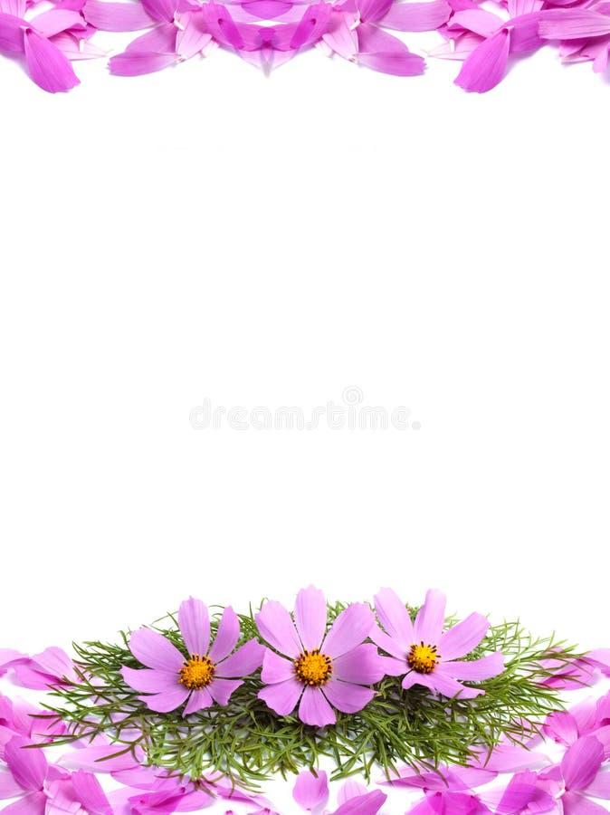 цветет лепестки стоковая фотография