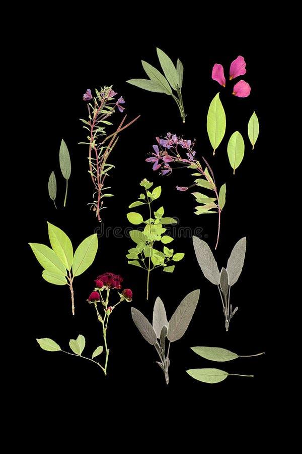 цветет лето трав стоковая фотография rf