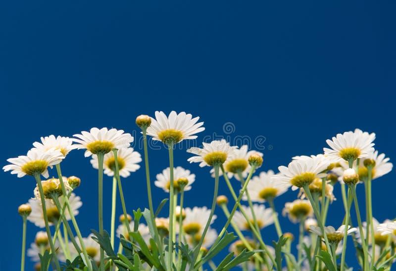 цветет лето стоковая фотография