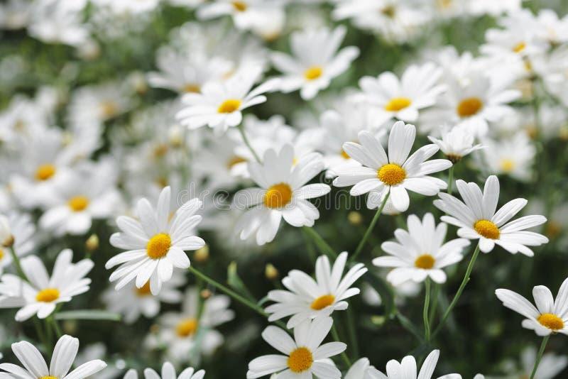 цветет лето стоковое изображение