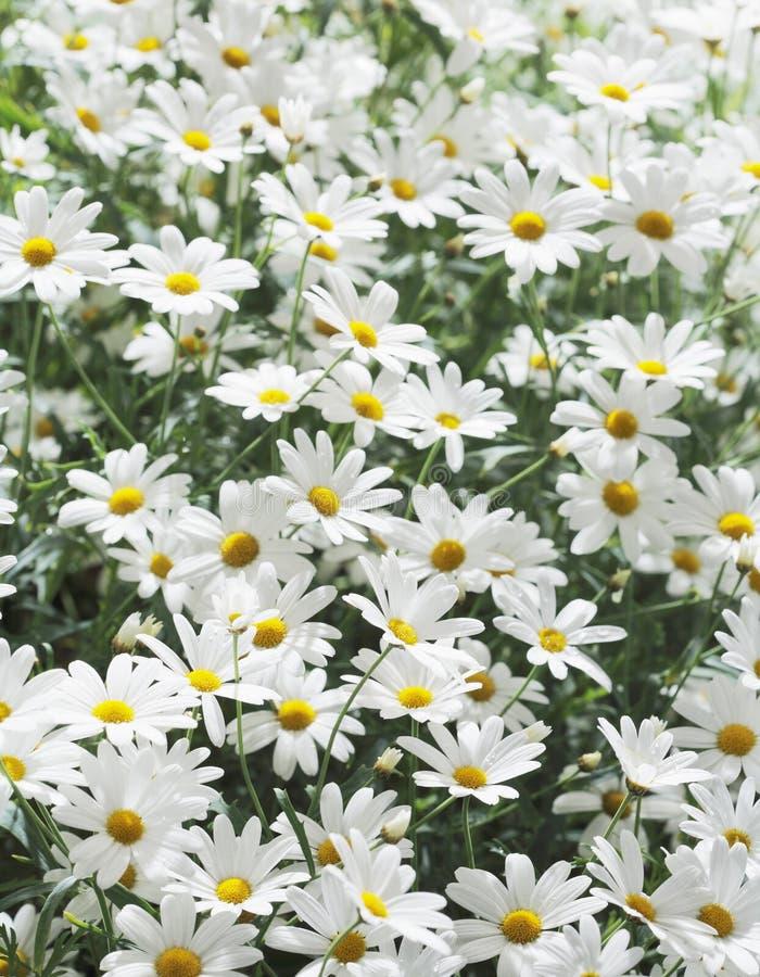 цветет лето стоковая фотография rf