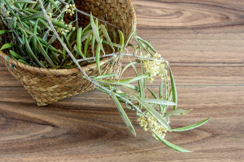 цветет оливка стоковая фотография rf