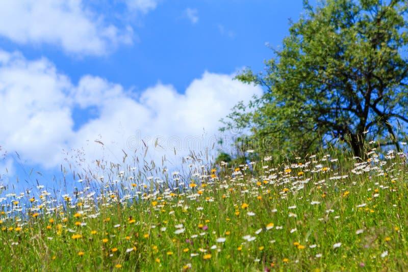цветет одичалое стоковые изображения rf