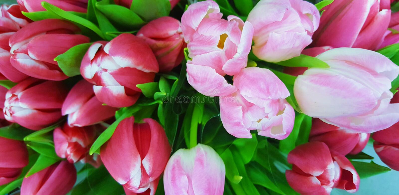 Цветет пинк bloomig природы красивый стоковые изображения rf