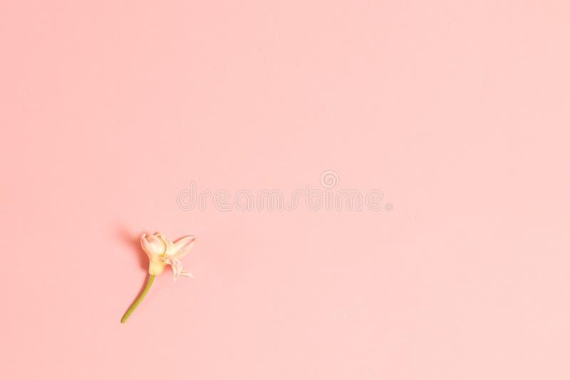 Цветет предпосылка с космосом экземпляра Плоское положение стоковое фото