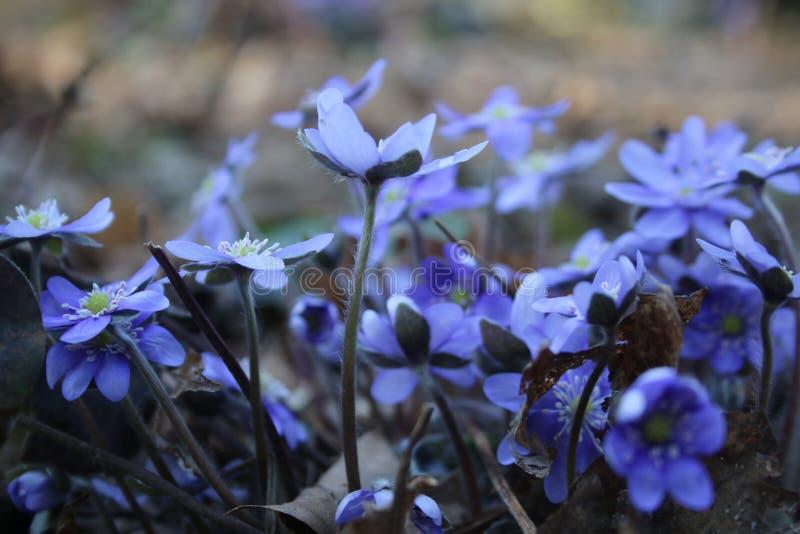 цветет природа стоковое изображение