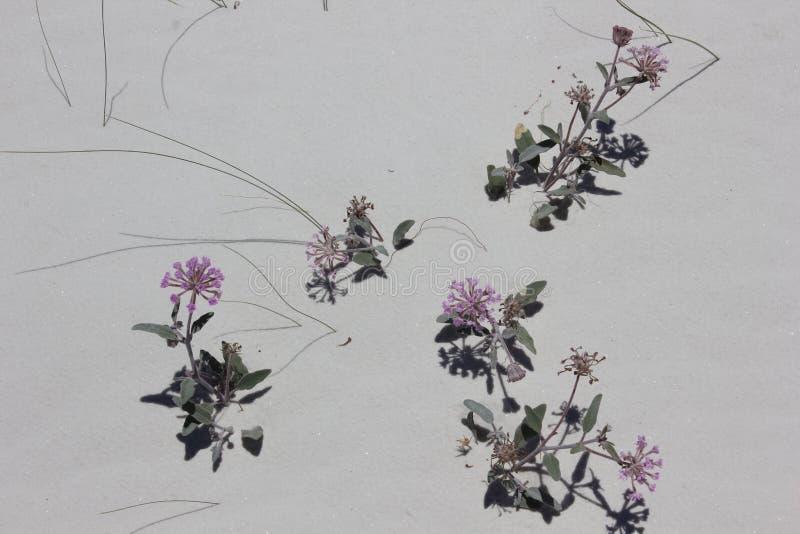 цветет пурпур стоковое фото rf