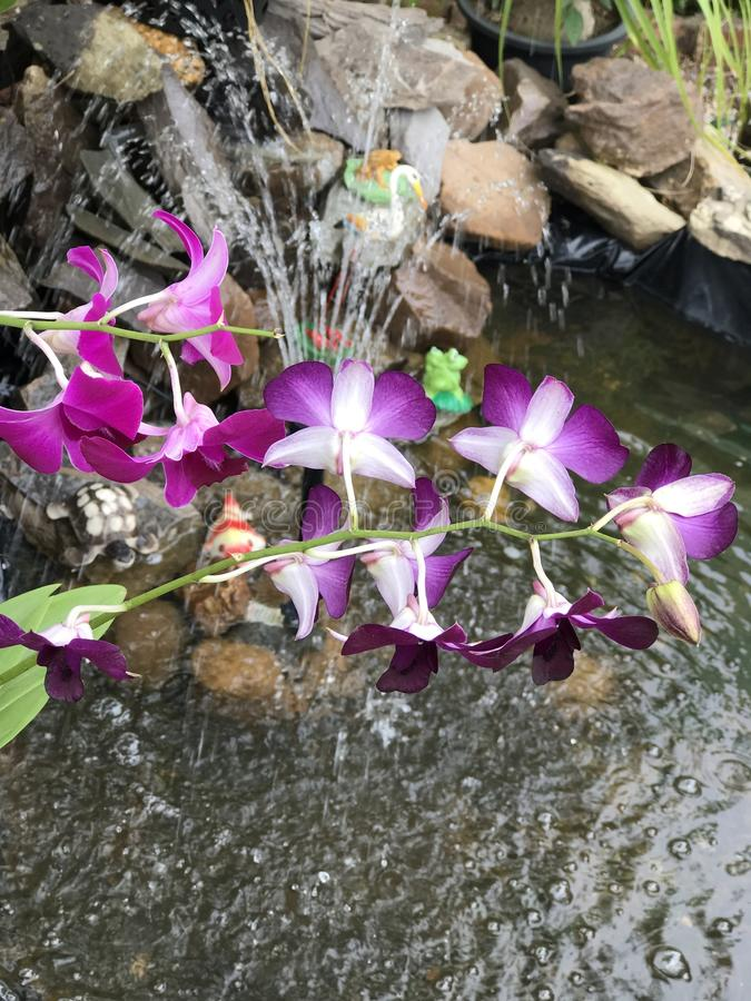 цветет пурпур стоковая фотография rf