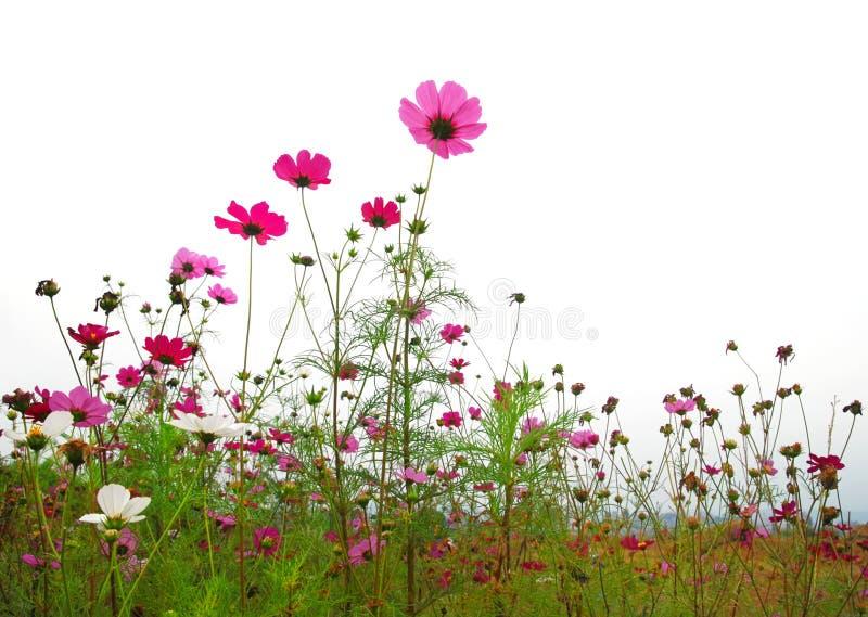 цветет пуща стоковые фото