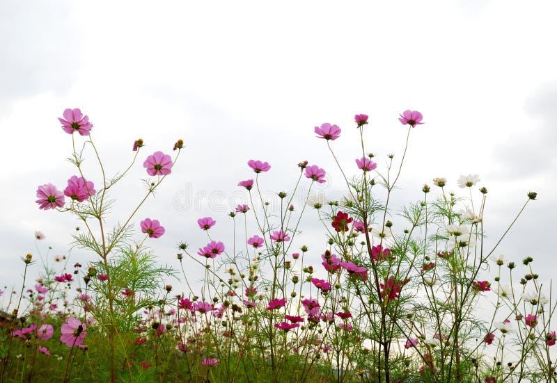 цветет пуща стоковая фотография rf