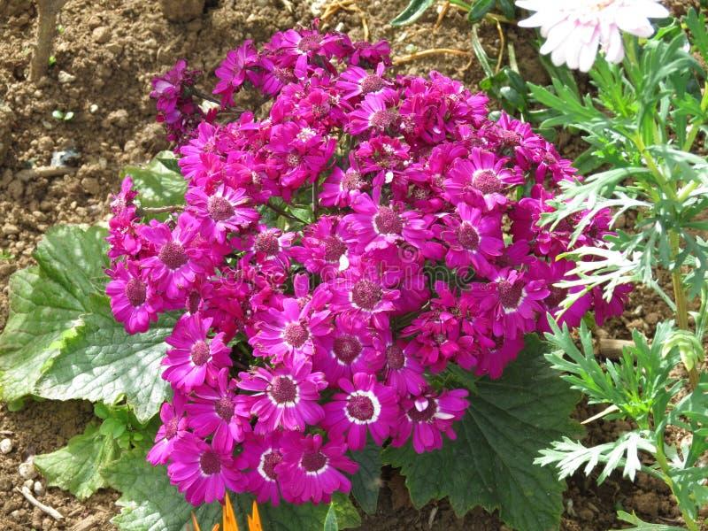 Цветет рамка цветков природы красивая стоковая фотография