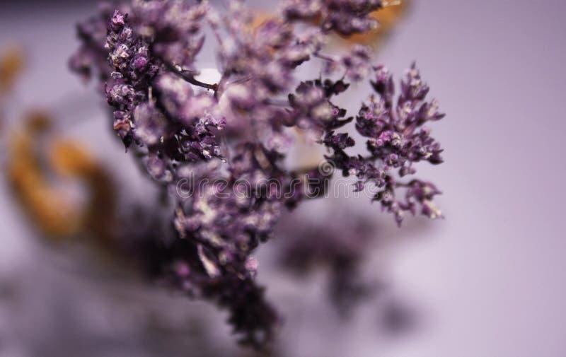 цветет романтичное стоковое изображение