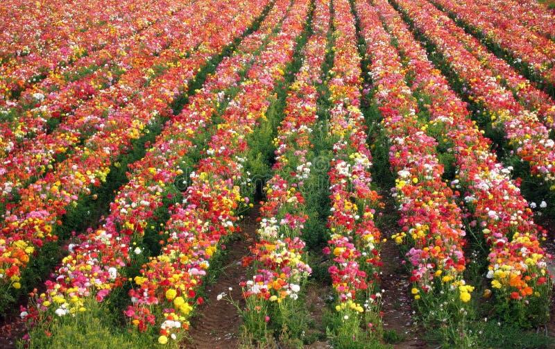 цветет свежее естественное стоковое фото