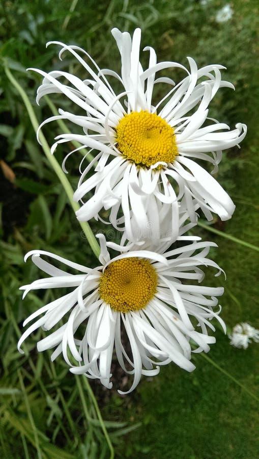 Цветет святыни стоковая фотография