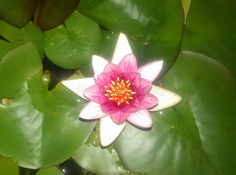 Цветет святыни стоковые фото